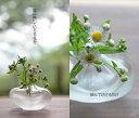 楽天一輪挿し「くもい」 一輪挿し・花器・結婚祝いにぴったりのガラス製の花器・花瓶・フラワーベースの通販・販売