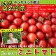 ミニトマト3kg箱入り(バラ詰め)Mサイズの場合約150個入り【送料無料】 10P31Au…