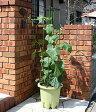 楽々菜園プランター 丸型380支柱フレーム付き プランター