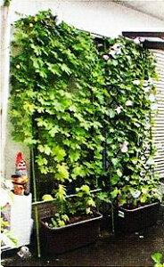 緑のカーテン/日除け節電対策に!ゴーヤネット/朝顔ネットなどに最適!かんたんグリーンカーテ...