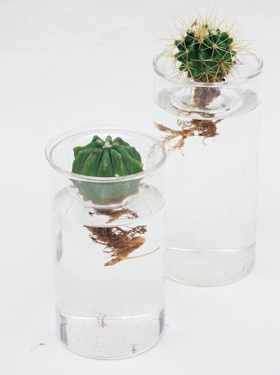 GLASS BULB BASE SHORT 球根用フラワーベース ショート【KEGY4060】ガラス花瓶 水耕栽培