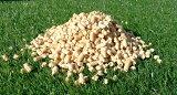 【送料無料】木質ペレット 猫砂お買い得 22kg ホワイトペレット 通常20kgで販売の所2kg増量中
