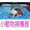 迷子のネコちゃん・ワンちゃんの捕獲に折りたたみ式小動物捕獲器(中型) 捕獲機