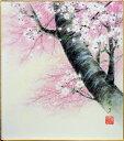 中西康多『桜』色紙絵