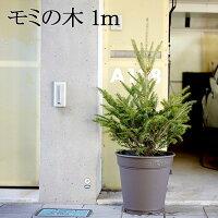 【送料無料】「もみの木 クリスマスツリー 購入」今年こそ!本物モミの木の生ツリー!【高さ:100cm】届いて・植えて・すぐ綺麗!鉢植えではないです。トウヒではない本物! ウラジロモミ【メッセージカード不可】【離島・沖縄配送不可】