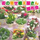 季節のお花寄せ植え定期購入(毎月15日前後にお届け)送料無料花春ギフトプレゼント鉢定期