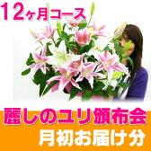 花 福袋 12ヶ月コースは初回1000円引き!麗しユリの福袋 ユリの産地や香りの違いわかる! 定期 頒布 切花
