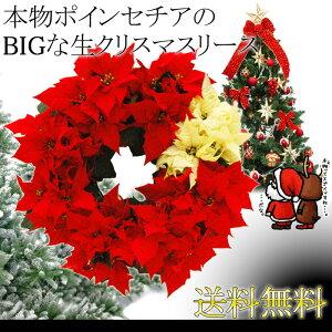 ポインセチア クリスマス リース本物ポインセチアのBIGな生クリスマスリース 直径40センチ 数...