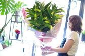 【5/6から22日着不可】ユリ カサブランカ10本の花束 お祝い 誕生日 結婚祝い 出産祝い 記念日 歓迎 退職 お見舞い 開店祝い 移転祝い ビジネス 楽屋花 傘寿 銀婚式 花 ゆり【メッセージカード無料】
