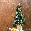 【送料無料】冬咲きクレマチスアンスンエンシスのクリスマスツリー95センチから100センチ玄関に花咲くクリスマスツリーを飾っちゃおう!