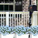 【送料無料】ネモフィラ特殊選抜3.5寸12苗セット【ラッピング・メッセージカード不可】