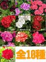 【送料無料】【2鉢セット】よく咲くゼラニウム カリオペ 5号 と、仲間たち全10種 こんもりし…