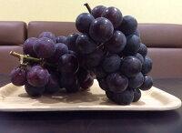 ポリフェノールの豊富なブドウも美味しいですよ