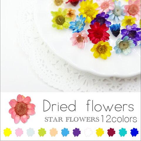 新色追加♪ スターフラワー ガラスドームに【生花を使用したドライフラワー12色】約10個入り