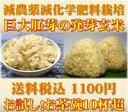 無洗米 美味しい