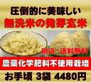 【新米】無農薬の発芽玄米白米モード楽々炊飯!圧倒的に美味しい無農薬の玄...