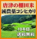 九州・佐賀県唐津28年産コシヒカリ10kg(5kg×2袋・棚田米)無洗米・送料無料・減農薬減化学肥料栽培