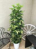 大型 観葉植物 ホンコンカポック 斑入り 10号鉢 H150-170cm 送料無料 ギフト 新築祝い 開店祝い 誕生日 インテリア シェフレラアルボリコーラ 引越し祝い