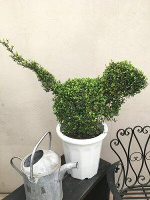 特上大玉ベンジャミン10号鉢トピアリー仕立て大型観葉植物インテリア