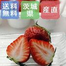 減農薬栽培イチゴ