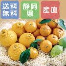 静岡浜北柑橘類のアソートセット