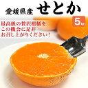 せとか 訳あり 5kg 1箱お買得 愛媛県宇和島産・S-2Lサイズ混合 (甘平と並ぶ高級柑橘)家庭用ギフトにも・送料無料