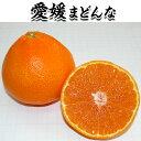 愛媛 まどんな 2.5kg 贈答完熟【愛媛県産 高級柑橘・紅...