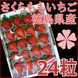 さくらももいちご 徳島県産 24粒 化粧箱入り(大粒サイズ)【送料無料】いちご ギフト 苺 イチゴ