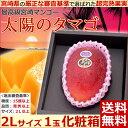 【シーズンオフ】【宮崎マンゴー 太陽のタマゴ 2Lサイズ1玉...