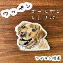 【2こ購入で100円引き】ゴールデンのワッペン♪ワンポイント
