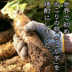 ちこり芋から作られた焼酎ちこりの焼酎!