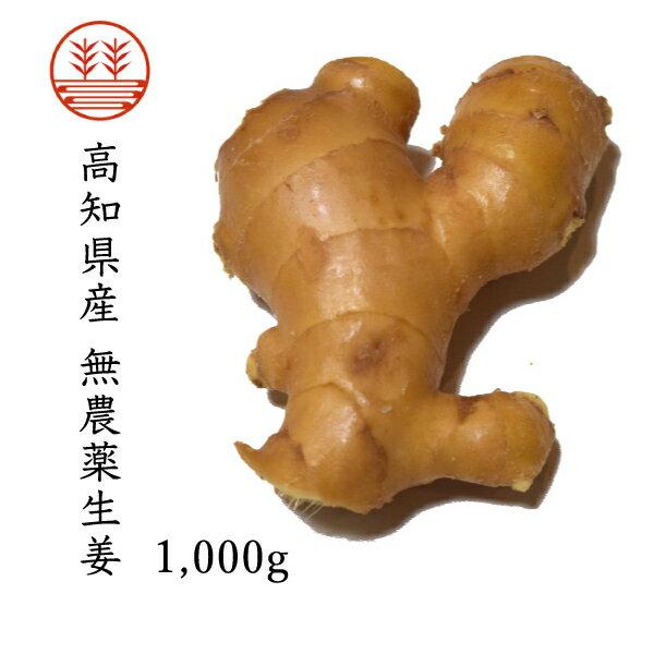 無農薬生姜1,000g 高知県産|国産生姜|しょうが ショウガ|根生姜 【送料込み】