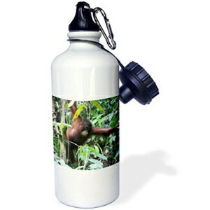楽天市場 3drose Wb 132818 1 Malaysia Borneo Orangutan Primate In Rainforest As23 Aas0032 Anthony Asael Sports Water Bottle 21 Oz White Glomarket