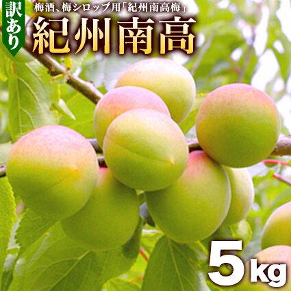 青梅 梅酒用 南高(なんこう)5kg【送料無料】