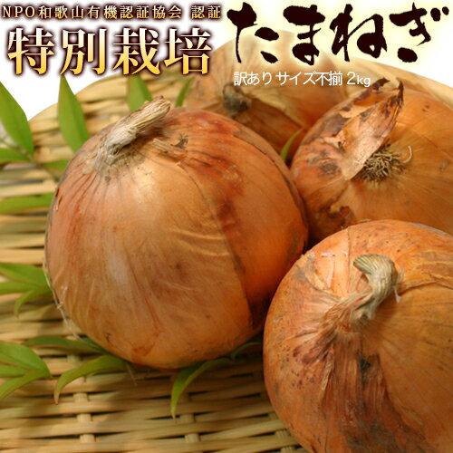 特別栽培 たまねぎ 2kg 【送料無料】