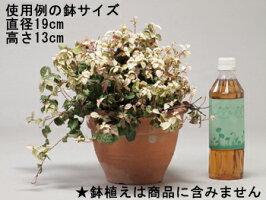 フラワースタンド〔gcs01-70〕使用例鉢