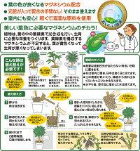 観葉植物の土2L