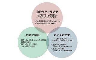 鳥取県産完熟黒らっきょう70g×1個無添加井上農園産地直送砂丘らっきょうポリフェノール健康他のメーカー商品との同梱不可