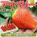いちご 千葉県産 「アイベリー」 8〜15粒 約500g ※冷蔵 【同梱不可】○