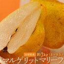 送料無料山形県産西洋梨マルゲリット・マリーラ約3kg(4〜8玉)