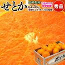 《送料無料》長崎産「せとか」バラ詰約2.5キロ(目安として15〜22玉)【同梱不可】☆