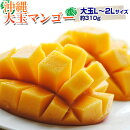 フルーツマンゴー沖縄県産マンゴーL〜2Lサイズ310g以上送料無料