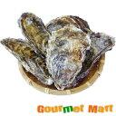 マルえもん[Lサイズ]30個セット 北海道産 牡蠣 カキ 殻付き 生食 母の日 ギフト 送料無料