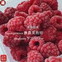 ラズベリー 冷凍 バラ 送料無料 (1kg×3パック) 無農