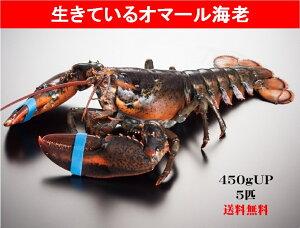 活オマール 5尾入り/カナダ産/ホール/ロブスター