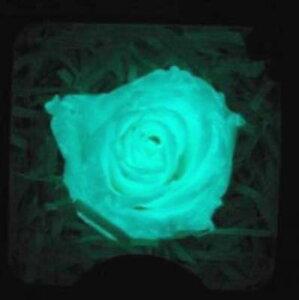 優しい光を放ちます(^o^)/光るバラ (ブルー発光) 【プリザーブドフラワー】 【蓄光薔薇】 【...