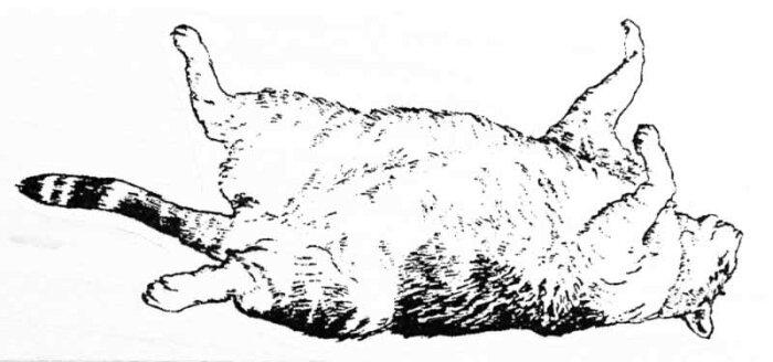 ラバースタンプ 眠っている猫 木の持ち手 ウッドマウント 輸入スタンプ アートスタンプ ゴム印・スタンプ