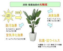 壁掛けグリーンフレーム多肉植物ホワイト(光触媒)造花・観葉植物・インテリアグリーン・フェイクグリーン・人工観葉植物
