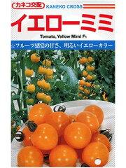 フルーツ感覚の甘いイエローミニトマト品種トマト カネコ交配・・・イエローミミ・・・<カネ...