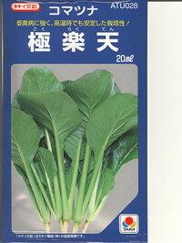 小松菜タキイ交配・・・極楽天・・・<タキイの小松菜です。種のことならお任せグリーンデポ>